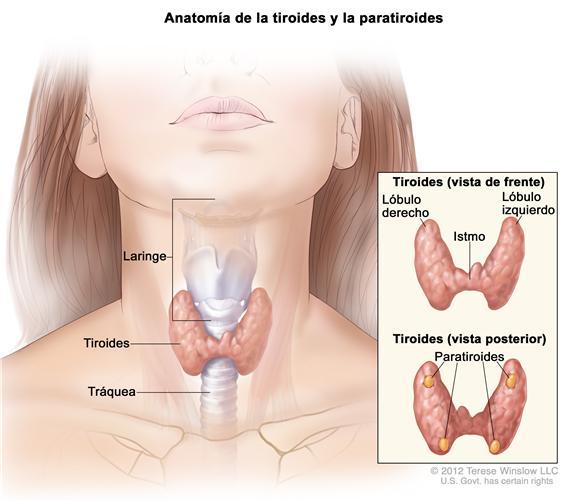 Enfermedades autoinmunes: Hipotiroidismo de Hashimoto